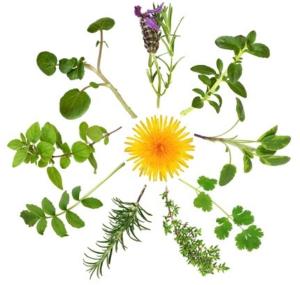 травы при эндометрите