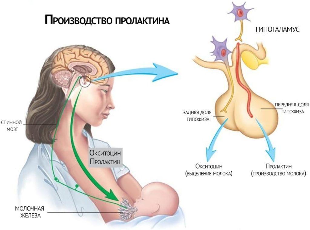причины гиперпролактинемии