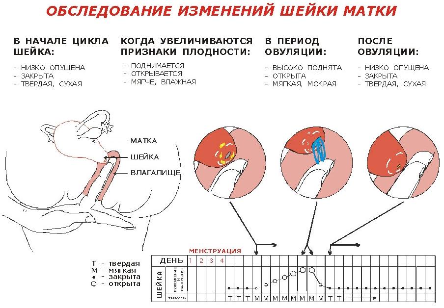 Менструация при ановуляторном цикле