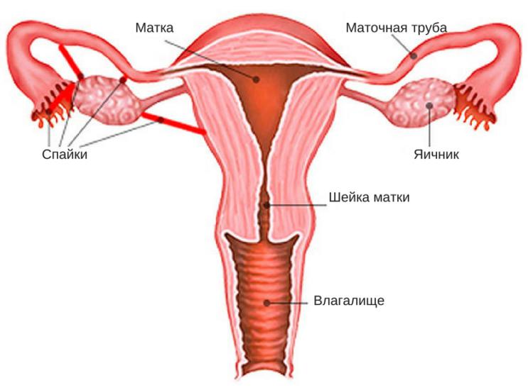 Лапароскипия кисты яичника: послеоперационный период