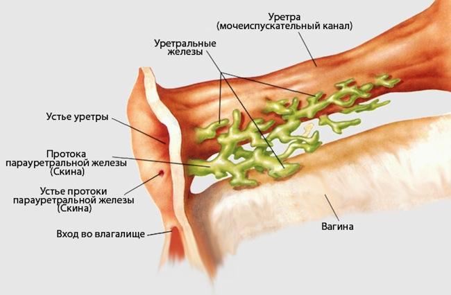 Парауретральная киста симтпомы и лечение