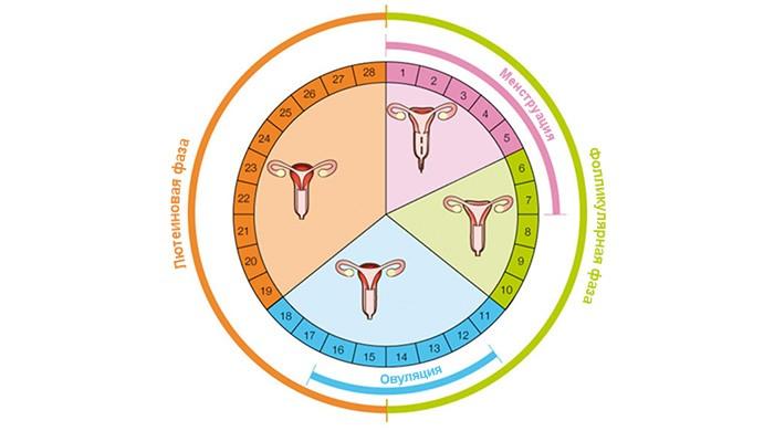 Можно ли идти к гинекологу во время месячных