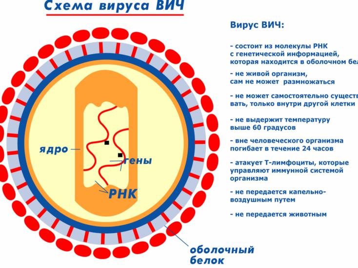 Месячные при ВИЧ