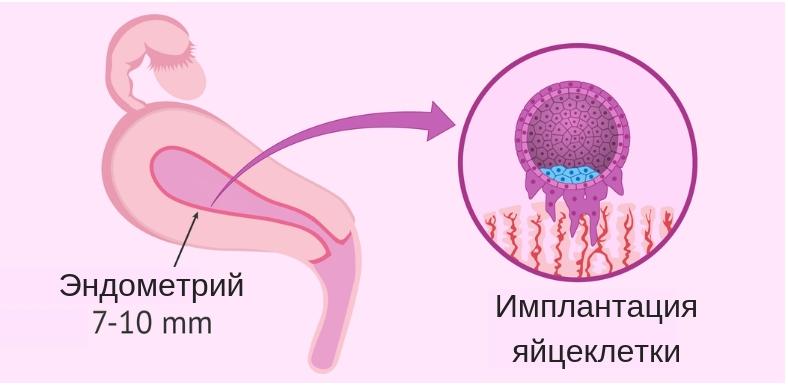 минимальная толщина эндомтерия для имплантации яйцеклетки