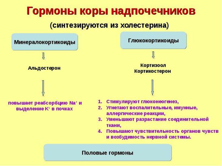 регуляция кортизола