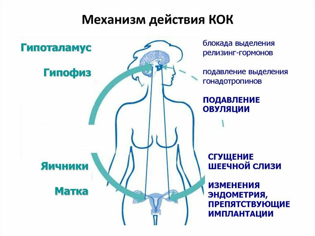 влияние ОК на организм