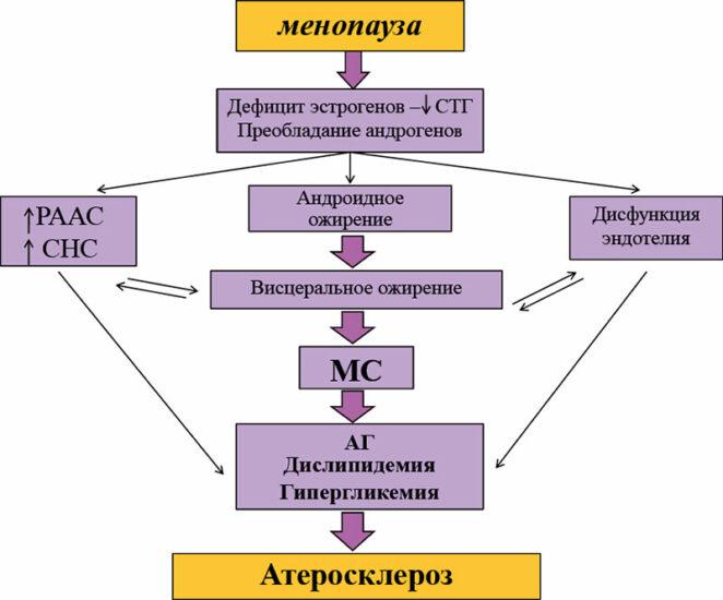 менопауза атеросклероз
