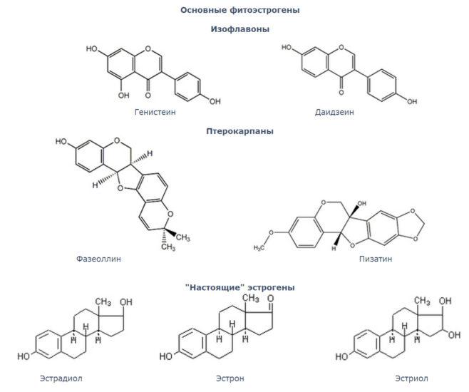 разновидности фитоэстрогенов
